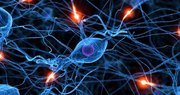 دانشمندان موفق به استخراج تصاویر از مغز انسان شدند